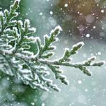 Winter :D