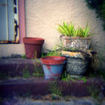 potted weeds by cedmundmiller