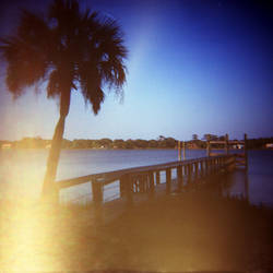 palm and pier by cedmundmiller