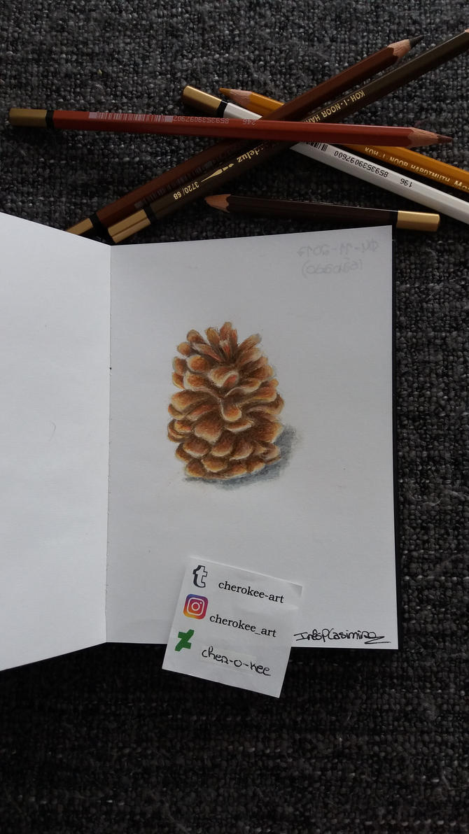 Pine Cone by cher-o-kee