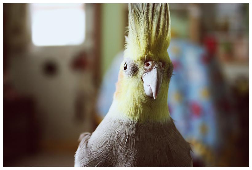 fresh4u's Profile Picture