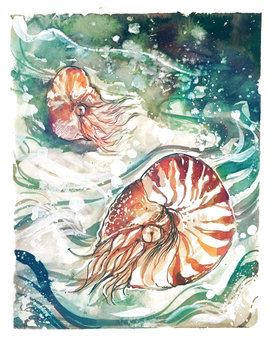 Nautilus by fresh4u