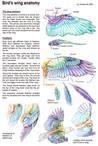 Bird's wing anatomy by unkraut