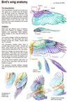 Bird's wing anatomy
