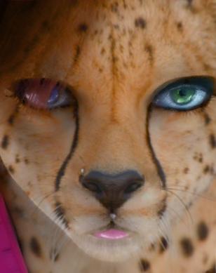 My fiancee, the cheetah by ricyn