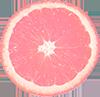Pastel Pink Citrus Slice - Deco