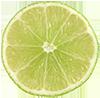 Lime Slice - Deco