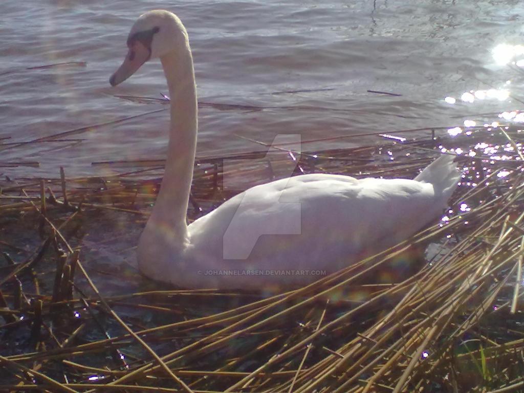 Swan by JohanneLarsen