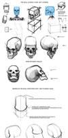 Quick Facial Anatomy Tips