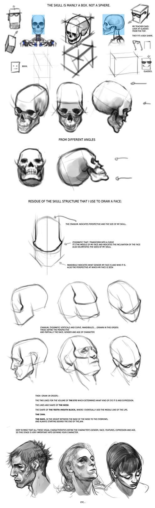 Quick Facial Anatomy Tips by Smirtouille on DeviantArt
