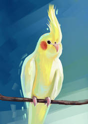 Cockatiel by 1NFIN1TY