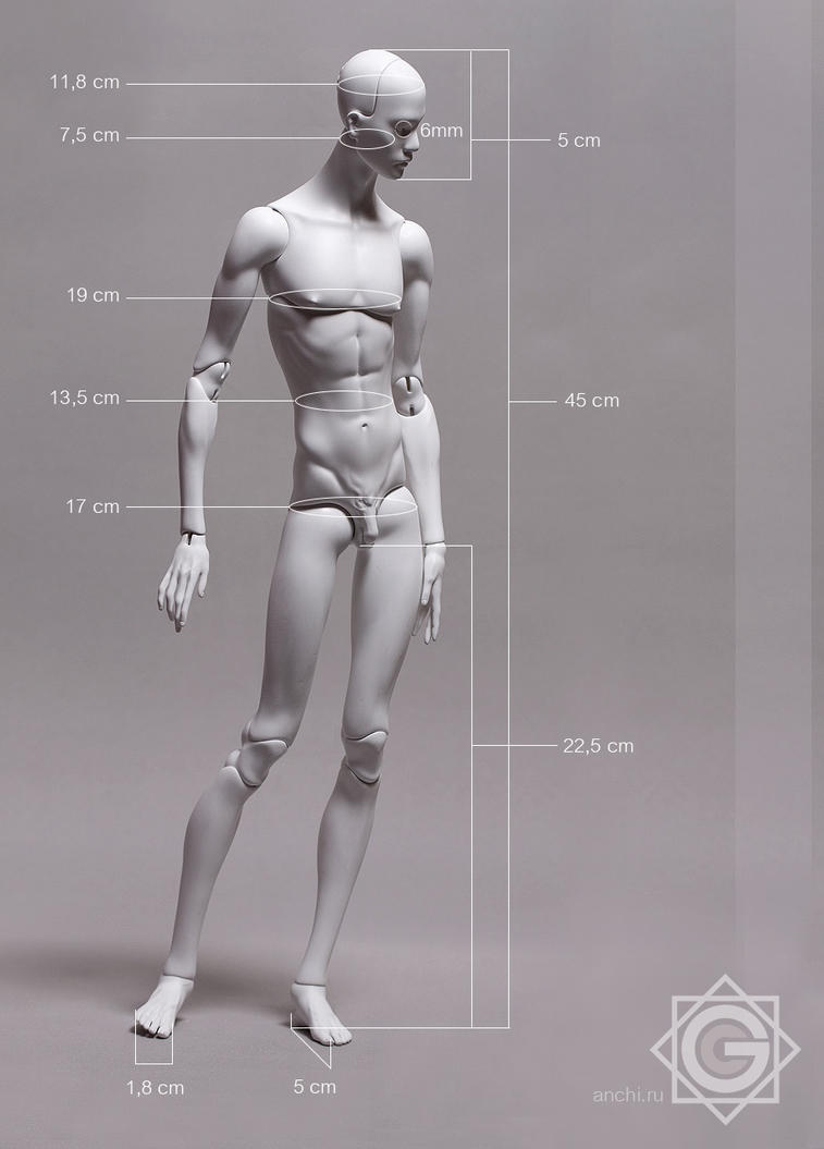 Body Size by Anchi