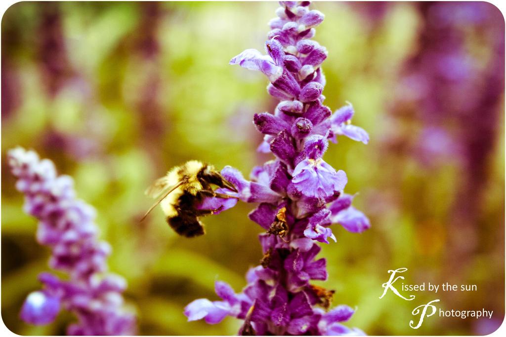 Summer Buzz by KissedByTheSunArt on DeviantArt