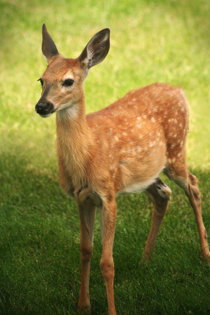Bambi by KissedByTheSunArt