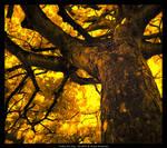 Under The Tree IR HDR