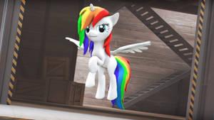 Rainbow Pone