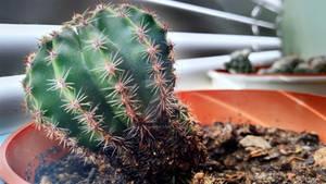 Cactus time :D