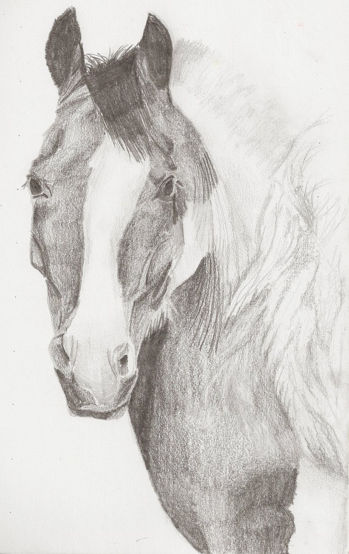 Pinto Horse Pictures Pinto Horse Headshot by