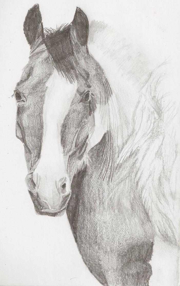 Pinto Horse Pinto Horse Headshot by