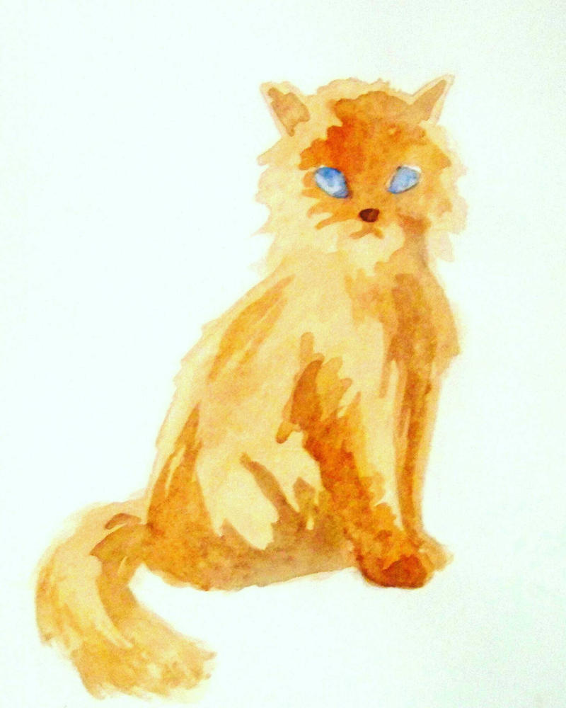 cat  by rjessup