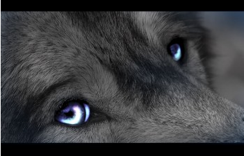 http://fc03.deviantart.net/fs71/f/2010/149/0/6/Eyes_of_a_Wolf_by_Moona_wolf.png
