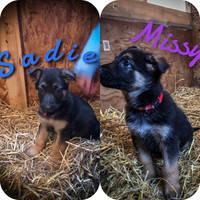 Meet the new fur babies
