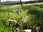 Grass and Weed