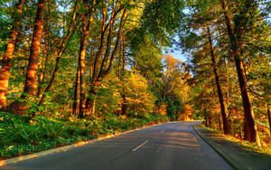 Morning Drive by IvanAndreevich