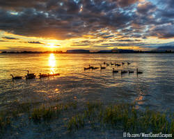 Geese by IvanAndreevich