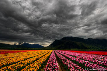 Cloudy Parade by IvanAndreevich