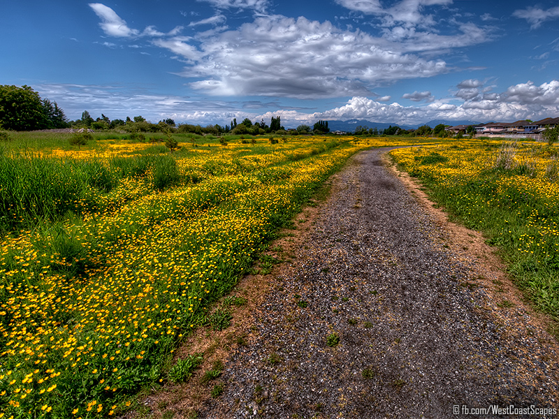 Yellow by IvanAndreevich