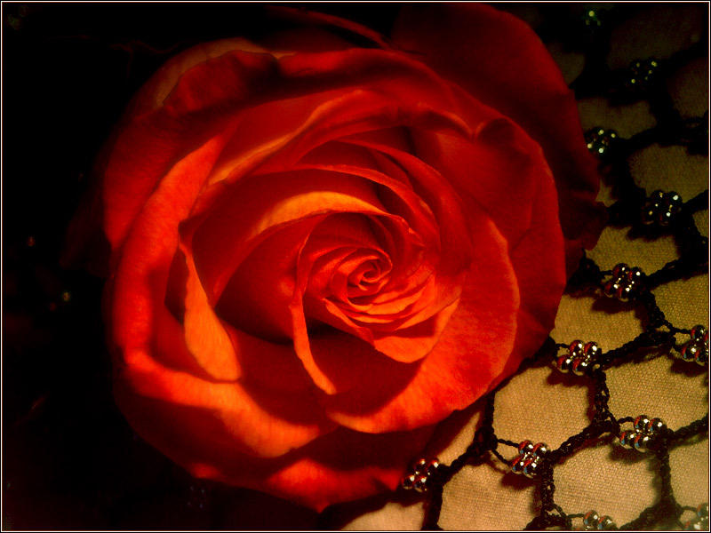 Rose Poetry Four by jezebel