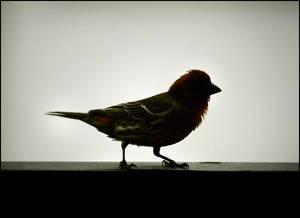 Cute Finch