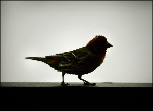 Cute Finch by jezebel