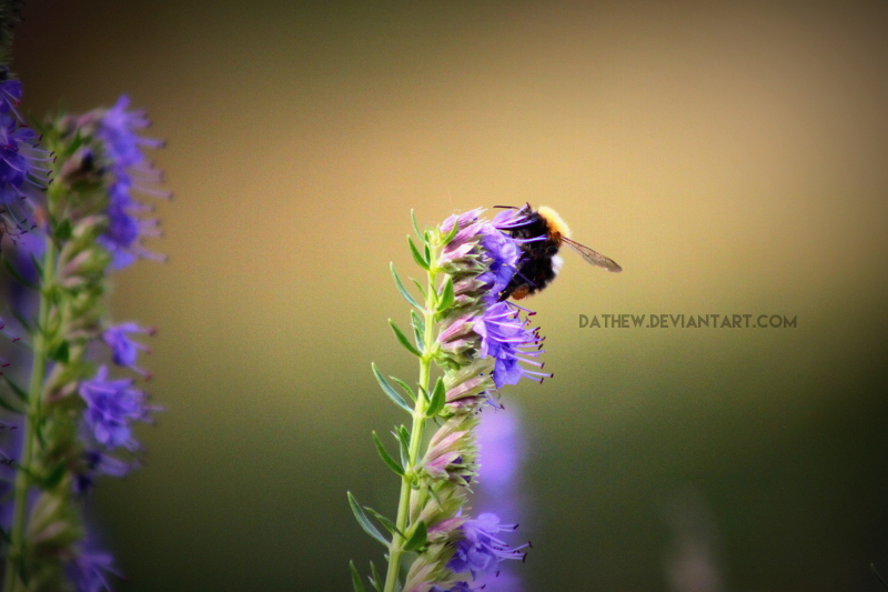 Bee by Dathew