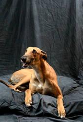 greyhound-7 by xstockx