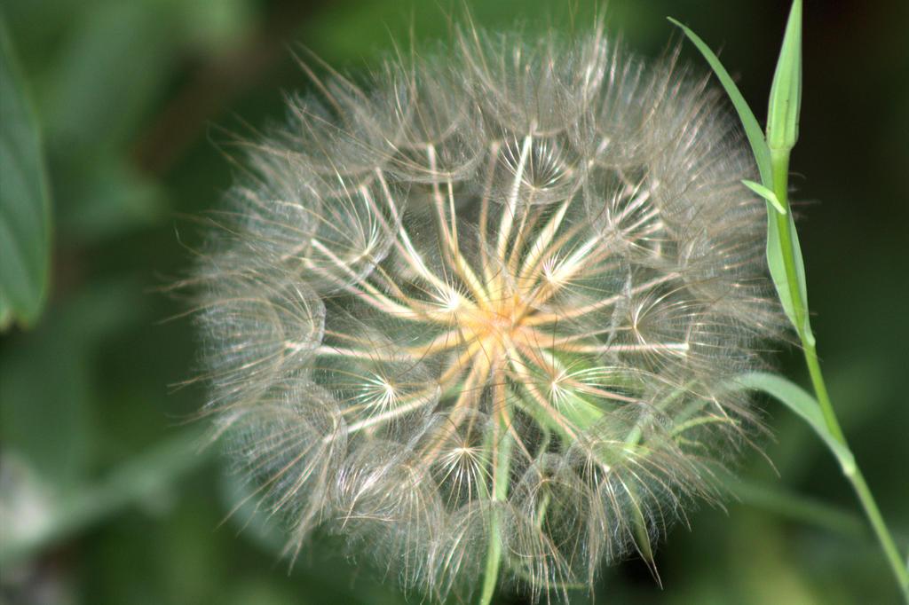 Make a wish by Paganheart22