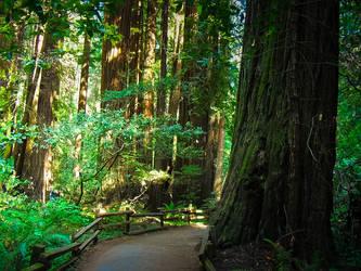 Muir Woods California 2 by Paganheart22