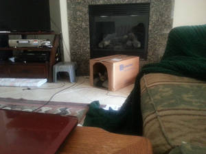 Cat Clubhouse