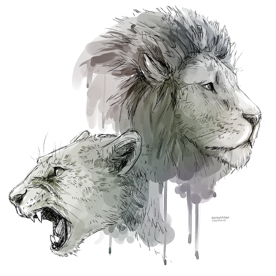 Lion roar by Dragoreon on DeviantArt