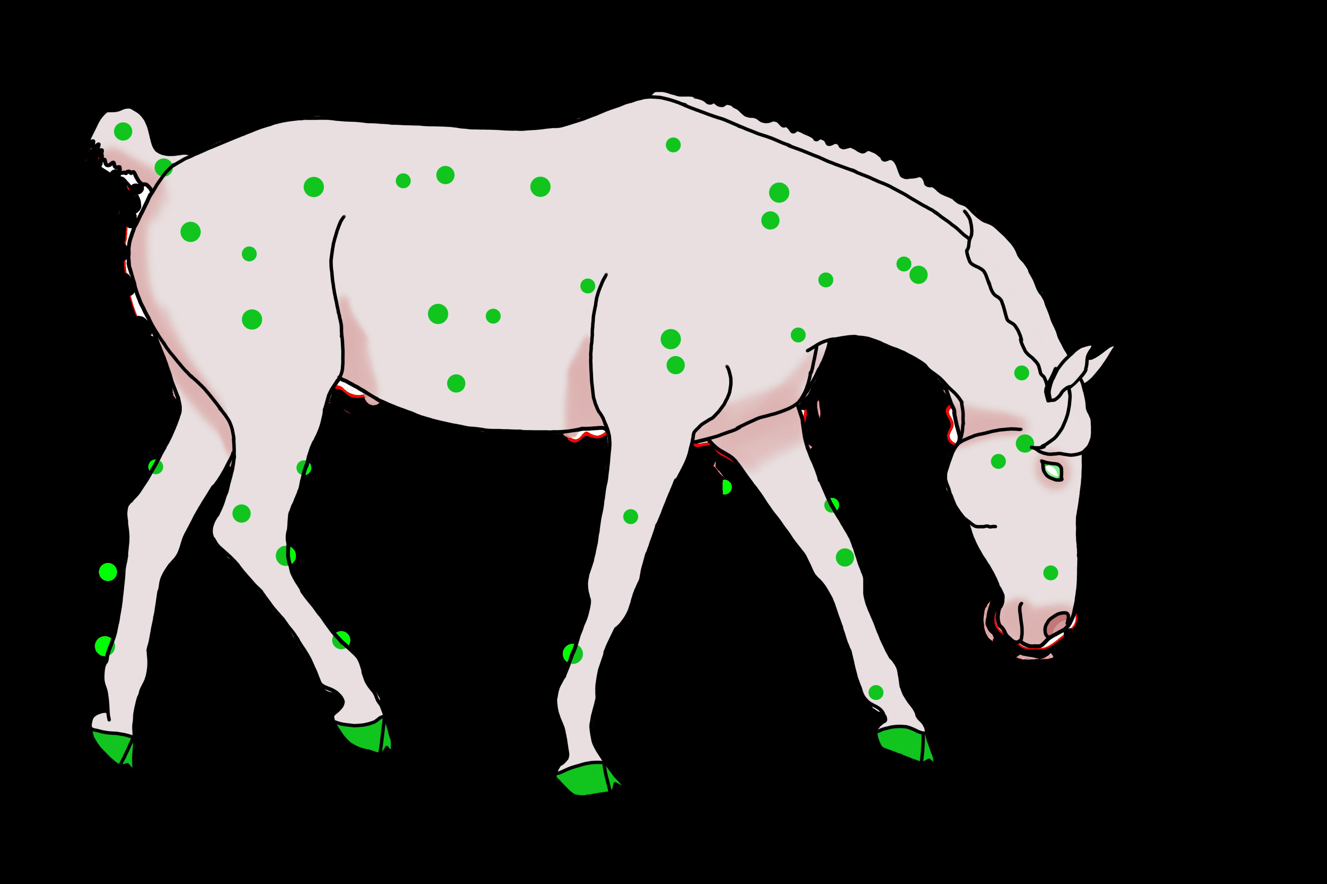 N5145 Glory Mint - OLTIN Stallion