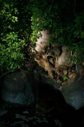 Tree by Camera02