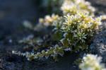 frosty Moss by Camera02