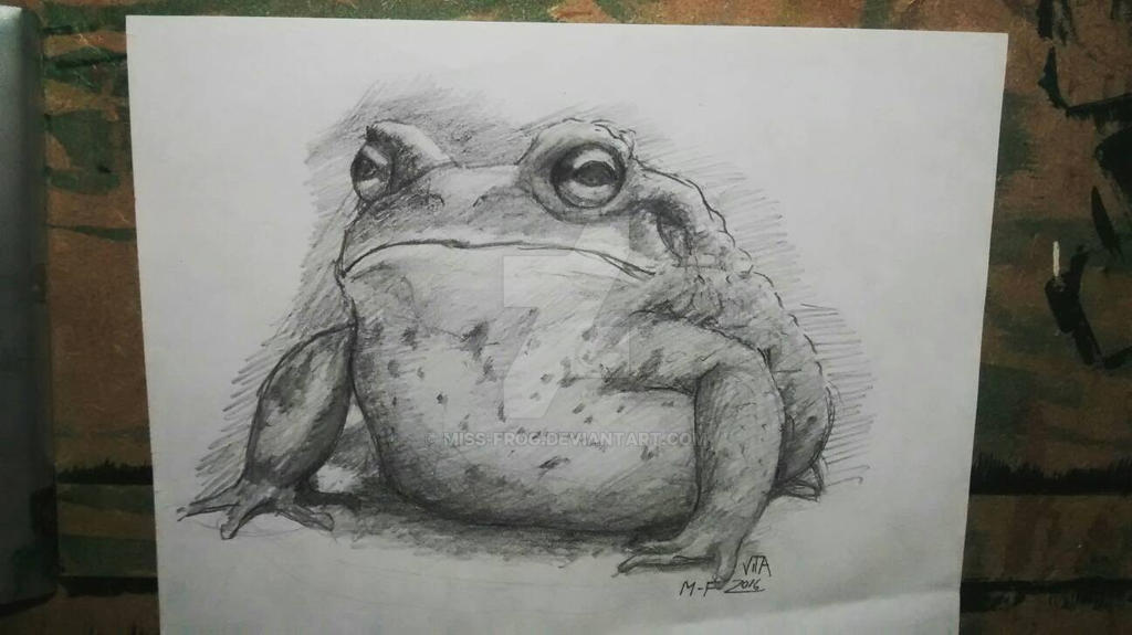 Big funny toad by miss-frog