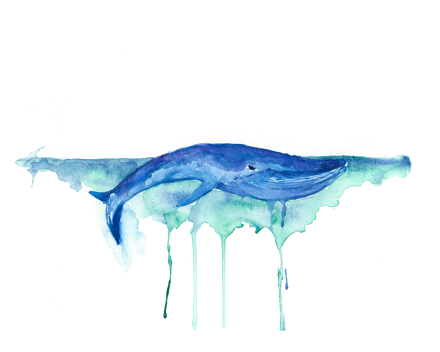 Blue Whale Watercolor Painting by EnviousV on DeviantArt