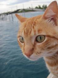 Island Cat by PotatoPrint007