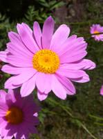 Flower 3 by major-azrael99
