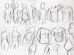 Female/Male Body Comparisons
