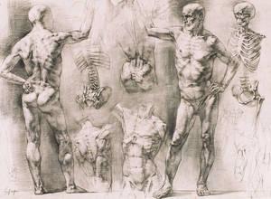 Male Figure Study