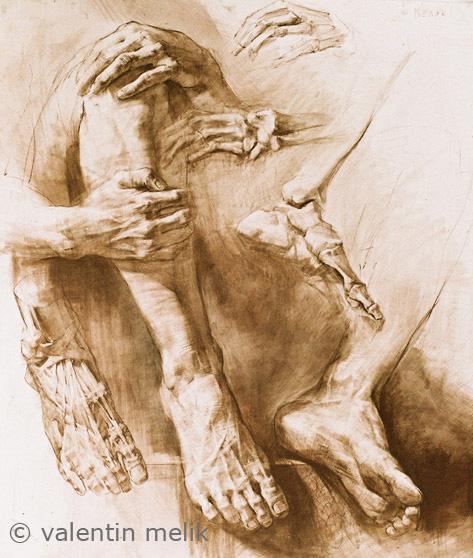 Study of arms and hands - by Leonardo da Vinci